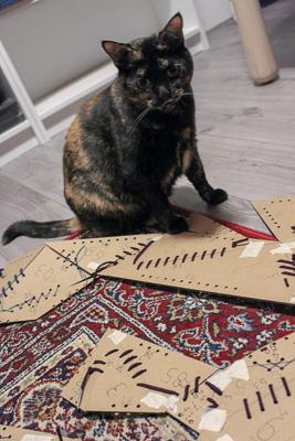 cat assistant still not helping