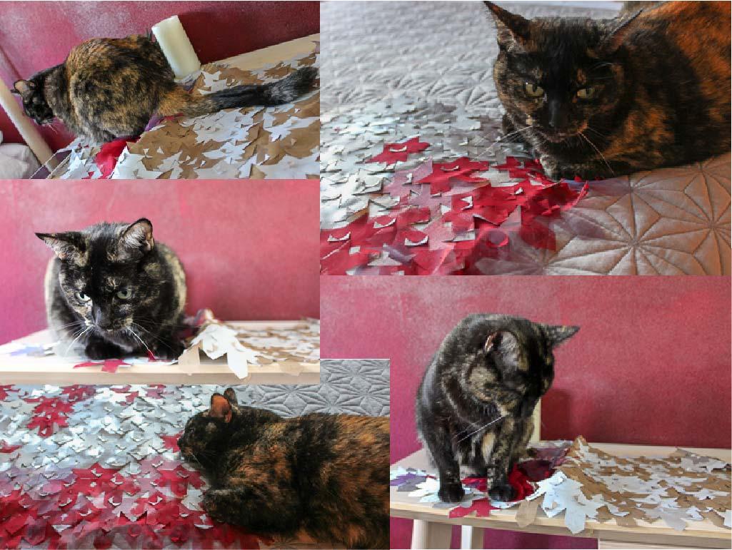 cat image collage